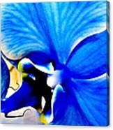 Blue Diamond Orchid Close Up Canvas Print