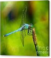Blue Dragonfly 2 Canvas Print
