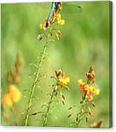 Blue Dragonfly In The Flower Garden Canvas Print