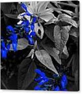 Blue Drippings Canvas Print