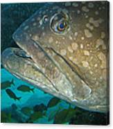 Blue-eyed Grouper Fish Canvas Print