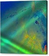 Blue Eyed Horse Canvas Print