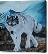 Blue Eyed Husky Canvas Print