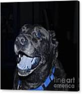 Blue Eyed Lab Smiling For The Camera Canvas Print