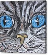 Blue Eyed Stripped Cat Canvas Print