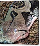 Blue Eyes Snake Canvas Print