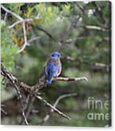 Blue Feathers Canvas Print