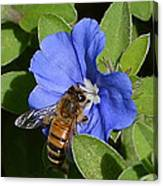 Blue Flower Bumblebee Canvas Print