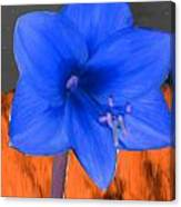 Blue Flower In The Fall At Night Canvas Print