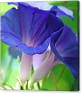 Blue Flutes Canvas Print
