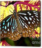 Blue Glassy Tiger Butterfly Canvas Print