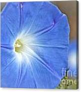 Blue Glories Canvas Print