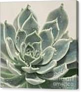 Blue Green Succulent Canvas Print