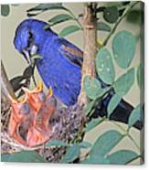 Blue Grosbeak Guiraca Caerulea Canvas Print