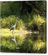 Blue Heron 01 Canvas Print