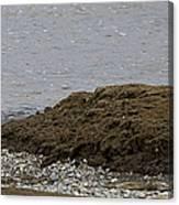 Blue Heron And Fish   #9642 Canvas Print