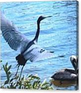 Blue Heron And Pelican Canvas Print