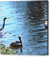 Blue Heron And Pelicans Canvas Print