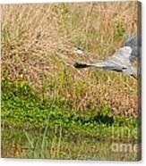 Blue Heron And The Black Bird Canvas Print