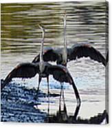 Great Blue Heron Ballet Canvas Print