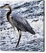 Blue Heron Fishing V3 Canvas Print