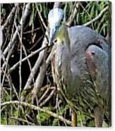 Blue Heron Greeting Canvas Print