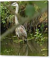 Blue Heron Hiding Reflection Canvas Print