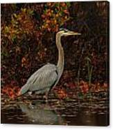 Blue Heron In The Fall Canvas Print
