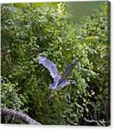 Blue Heron Journey I Canvas Print