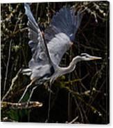 Blue Heron Lift Off Canvas Print