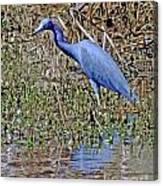Blue Heron Louisiana Canvas Print
