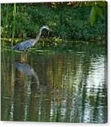 Blue Heron Magic Canvas Print