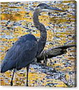 Blue Heron Naturally Canvas Print