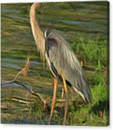 Blue Heron On The Bank Canvas Print