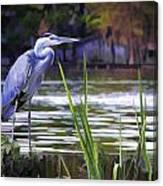 Blue Heron On The Bay Canvas Print