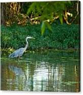 Blue Heron Reflection Canvas Print