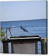 Blue Heron Canvas Print