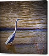 Blue Heron - Shallow Water Canvas Print