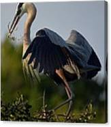 Blue Heron Wing Tips Canvas Print