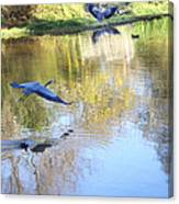 Blue Herons On Golden Pond Canvas Print