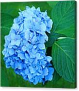 Blue Hydrangea Flower Art Prints Nature Floral Canvas Print