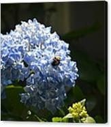 Blue Hydrangea With Bumblebee Canvas Print