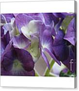 Blue Hydrangeas Canvas Print