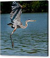 Blue In Flight Canvas Print