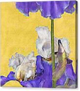 Blue Iris On Gold Canvas Print