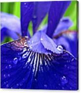 Blue Iris Rain Drops Canvas Print