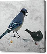 Blue Jay And Junco Canvas Print