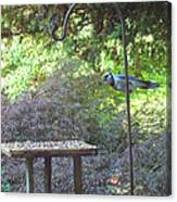 Blue Jay At Lunch Canvas Print