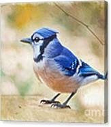 Blue Jay - Digtial Paint Canvas Print