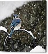 Blue Jay In Snow Storm Canvas Print